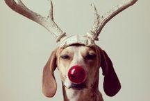 Christmas Festivities  / Holidays
