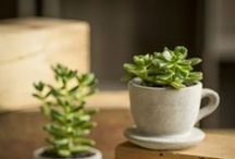 Home Gardens & Greenery / Easy ways to incorporate greenery into your life. / by So Delicious Dairy Free