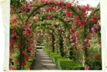 Gardens / by Bobbi Sumpman