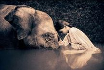 Ellie love / by Catina jane Gray