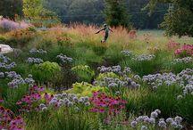 Garden / by Bunia