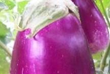 Caribbean Fruit ~ Spices - Vegetables / Caribbean Fruit ~ Spices - Vegetables / by Caribbean Sunshine or @CaribbeanInfo