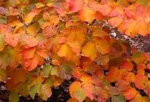 Plants For Fall Color/Winter Interest