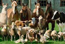 Farm Squad | Farm On! / Farm squad – animals and cutie pies!