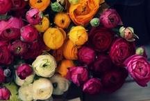 NATURE *flowers* / Flowers