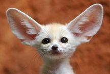 ANIMALS *so cute* / Cute animals.....