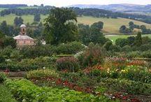 The glorious garden