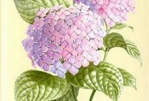 Botanical Prints / by Carla Androy