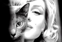 Celebrities with cat / by Suzhi