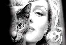 Celebrities with cat