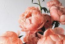 ✿ Blossom ✿
