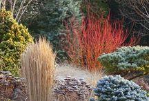 Хвойные растения- Conifer collection