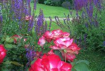 My garden - Мой сад.