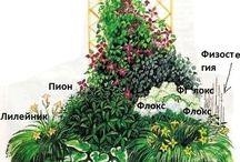 Цветы,растения...