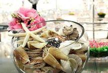 SEASHELLS / Shop Seashells