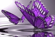 Colours - Touch of Purple
