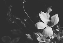- F I O R I - / Some lovely blooms.  / by Jenna Noelle
