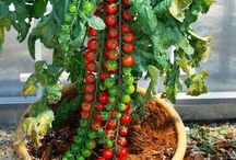 Grow - In Our Garden / Gardening tips and tricks.