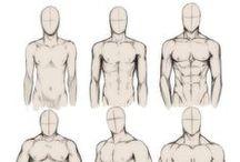 anatomia / cuerpo humano