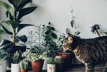 Gardening / plants for the home and tips