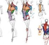 Figure construction / Anatomy / drawing reference and studies for character design