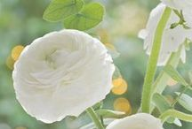 blumen // flowers