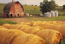 Barns / by Janet Ellis