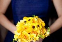 Blues and yellows