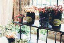 Greenery / Houseplants, flowers, pots, planters, bouquets, floral arrangements
