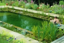 Dream Yards & Outdoor Ideas / by Linda Heck