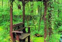 garden / by Liz Clark