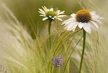 Another Garden Grows... / by Terri Marie