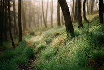 [dans les bois]