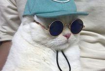 CATS N CLOTHES