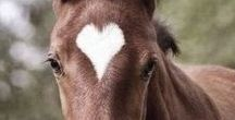 Horse Lovers / For Horse Lovers! <3 Please feel free to Pin Beautiful Horses, Horse Riding Pics & Quotes! Please do NOT Spam and try to post 4-5 images at most. (Also try to limit the amount of info-graphics you post as we want this board to be purely Horses!) Enjoy!