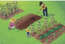 Gardening ~ Vegetables, Fruit, Herbs / by Allison Robbins