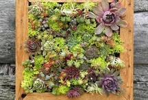 Macetas y plantas