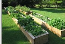 How Does Your Garden Grow? / A plethora of gardening techniques, tips and gadgets for every season and region.