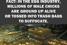 cruel treatment of the voiceless animals / Animal cruelty in the meat and fur industry