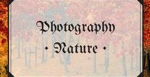 Photography • Nature / The best in landscape and animal photography