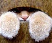 kočky - chat - cat