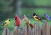 Birds  / by Nancy May