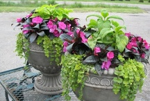 GARDEN POTTED PLANTS