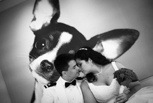 Furry Friends at Your Wedding / by Style Events