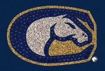 UC DAVIS AGGIES / A place for the University of California, Davis students, faculty, alumni, and fans to connect. Go Aggies!!