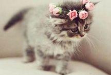 •Katter