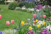 Garden Stuff / by Elaine Sullivan