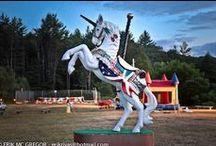 The daily unicorn