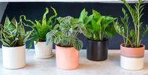 Растения /Plants