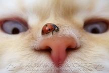 Animal cuties / by Saundra McKenzie